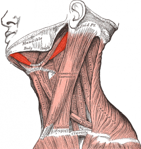 neck_greys_anatomy